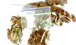Catálogo completo de semillas feminizadas de Ministry Of Cannabis