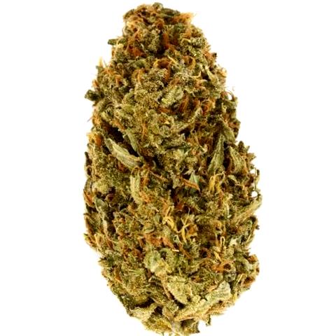 Consigue tus semillas de marihuana Dinafem feminizadas