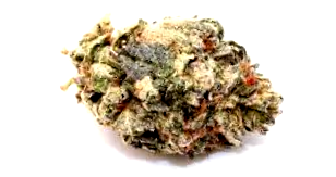 ¿Por qué comprar la Semilla de Marihuana Special Kush a Granel?