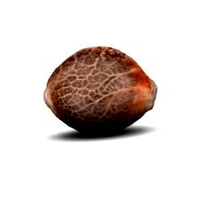 Características de las semillas Sweet Deep Grapefruit
