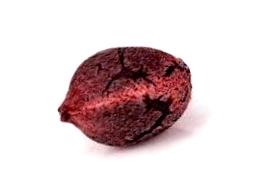 ¿En que web comprar semillas Critical?