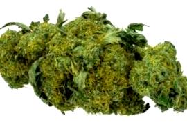 ¿En qué web comprar semillas Jack Herer?