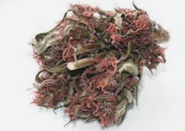 Comprar semillas regulares Top Tao Seeds