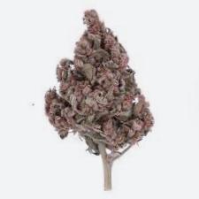 ¿Por qué comprar semillas de marihuana regulares R-Kiem Seeds?