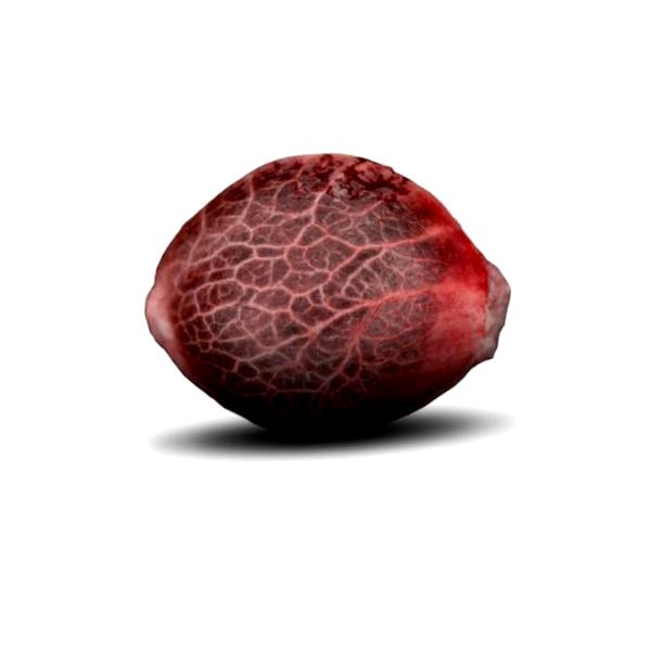 ¿Qué son las semillas autoflorecientes Dinafem?