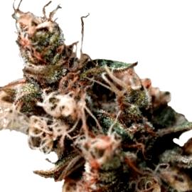 ¿Es seguro comprar semillas Green House Seeds autoflorecientes online?