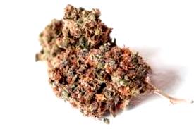 Bancos de Semillas de marihuanaAutoflorecientes