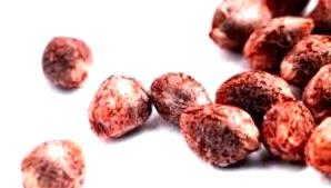 ¿Cómo son las semillas autoflorecientes 00 Seeds?