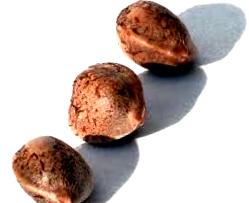¿Cómo son las semillas auto a granel?