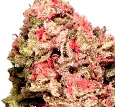 Comprar semillas de marihuana Mazar