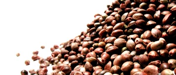 Características de las semillas más resinosas