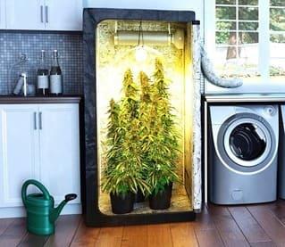 ¿Cómo demostrar que una planta es tuya para uso privado?