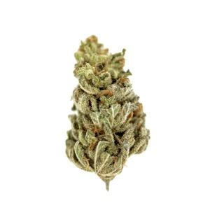 ¿Cómo comprar semillas de marihuana a Granel feminizadas?