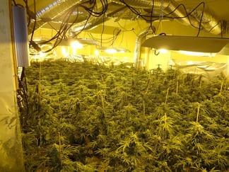 ¿Cuántas plantas puedo tener en casa legalmente?