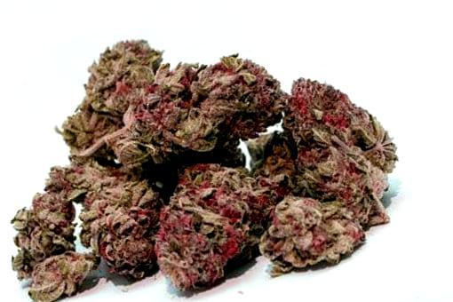 ¿Dónde puedes comprar semillas de cannabis Moby Dick?