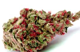 Las mejores variedades de marihuana Skunk