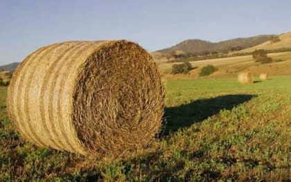 Las ventajas ambientales de las biomasas orgánicas