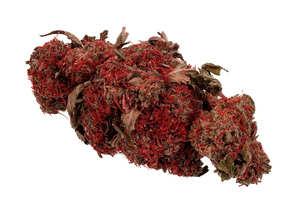 Opiniones de las Semillas de Marihuana Heavy Weight Auto