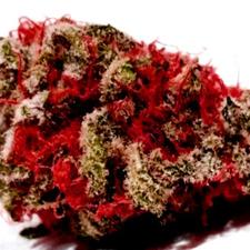 ¿Por qué comprar semillas de marihuana Critical Super Silver Haze?