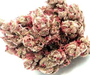 ¿Por qué comprar semillas de marihuana fáciles de cultivar?