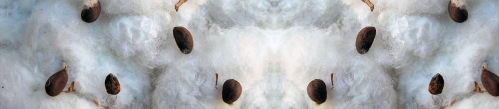 ¿Qué necesitas para germinar semillas de marihuana en algodón?