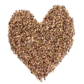 ¿Qué son las semillas Ace Seeds feminizadas?