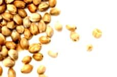 ¿Qué son las semillas de marihuana feminizadas Exotic Seeds?