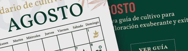 calendario-cultivar-marihuana-agosto