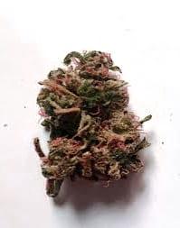 Semillas de marihuana Kannabia Seeds Autoflorecientes